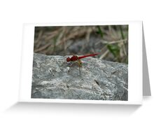 Red Dragonfly, Macleay River Greeting Card