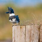 Kingfisher Pose by David Friederich