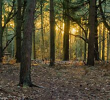 Forest floor at sunset by mikey2000