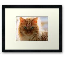 It Is Good To Be Cat Framed Print