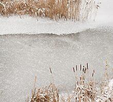 Typha reeds winter season by Arletta Cwalina