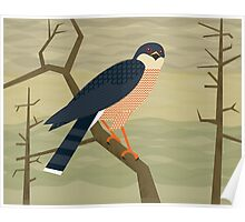Sharp-Shinned Hawk Poster