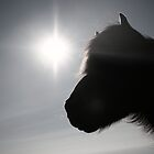 The icelandic horse by sunnaix