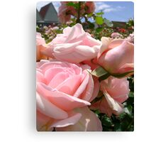 Not all Roses are red  Canvas Print