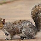 Grey Squirrel Profile by Franco De Luca Calce