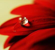 Red velvet by Ella Hall