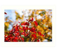 Colours of Autumn Art Print