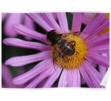 In The Flower Patch Poster