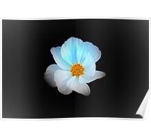 White and Blue Flower Poster