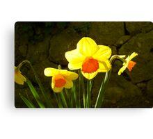 Bright daffodils ! Canvas Print
