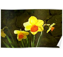 Bright daffodils ! Poster
