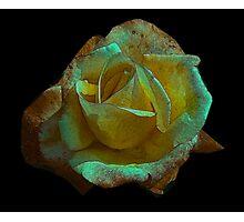 Rose -#2 Photographic Print