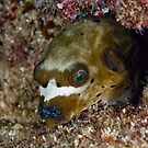Dogface Puffer at the Junkyard by Michael Powell