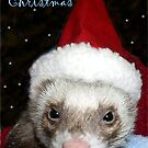 Santa Ferret by Glenna Walker
