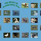 Amsterdam Zoo Birds by Robert Abraham