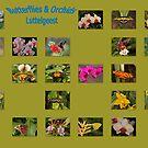 Butterflies & Orchids by Robert Abraham