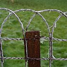 Frozen fence by mindfulmimi