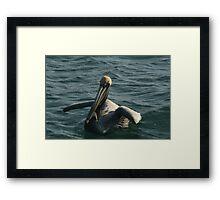 Pelican Afloat Framed Print