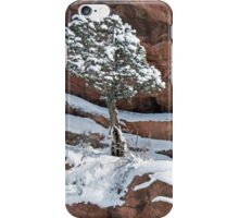 Tree at Red Rocks iPhone Case/Skin