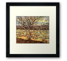 'Apricot Trees In Blossom' by Vincent Van Gogh (Reproduction) Framed Print