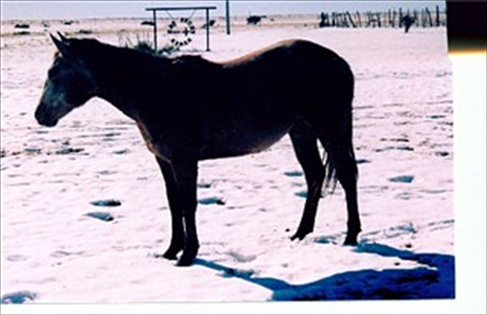 Zoe Filly Merry X-mass by nucklheadsports