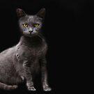 Gray Cat by Kimberly Palmer