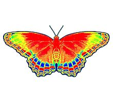 Colorful Butterfly - Red Photographic Print