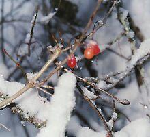 berry festivity by lightTheWay
