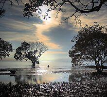 Mangroves by Neil Gavin