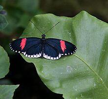 Butterfly by John Absher