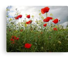 It's Poppy Season #1 Canvas Print