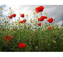 It's Poppy Season #1 Photographic Print