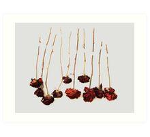 Ten Roses Art Print