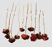 Ten Roses by John Douglas