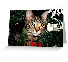 A Christmas Tree isn't for Climbing ? Greeting Card