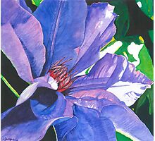 Big Blue Clematis Photographic Print