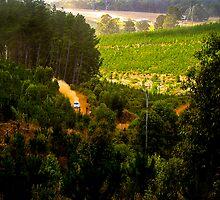 Speedy Vista by Peter Evans