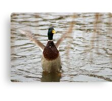 In a flap Canvas Print