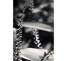 Untitled 4.0 Photographic Print