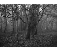 Deadly Woods Photographic Print