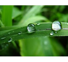 just a drop will dew it Photographic Print