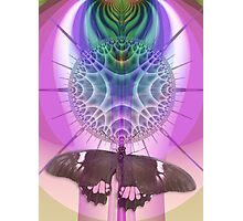 Season of the butterfly Photographic Print
