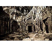 Tomb Raider (Ta Prohm, Siem Reap, Cambodia) Photographic Print