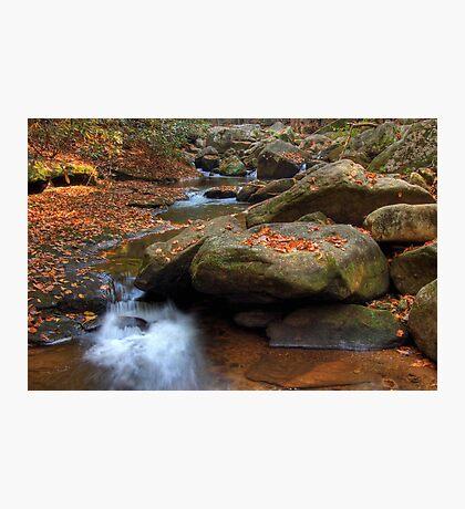River Wilderness Photographic Print