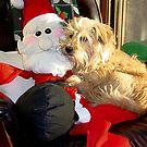 Sharing The Chair With Santa! by mlou