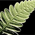 Veins In The Pinna Of A Fern Frond by Jean Gregory  Evans