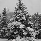 Winter by Tracy Wazny