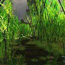 Bamboo Path by Steve Davis