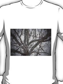 Snow on the Sycamore   T-Shirt