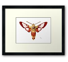 Hummingbird Clearwing Moth Framed Print